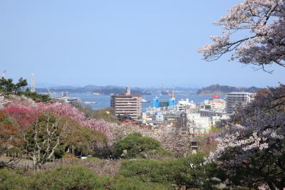 2012sakura4761