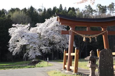 2012sakura4762